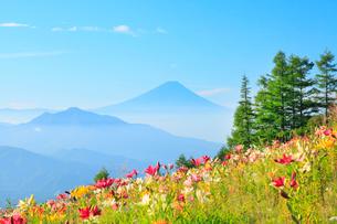 ユリの花と富士山の写真素材 [FYI02085653]