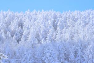 霧氷の写真素材 [FYI02085655]