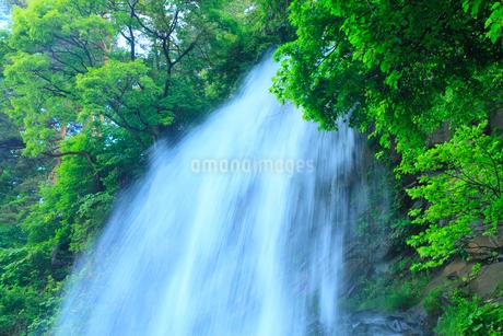 乙女滝と新緑の写真素材 [FYI02085664]