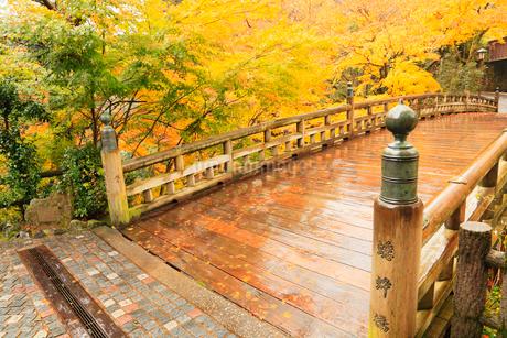 山中温泉・こおろぎ橋と紅葉の写真素材 [FYI02085699]
