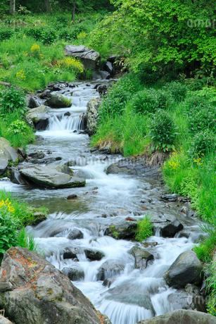 新緑の渓流の写真素材 [FYI02085716]