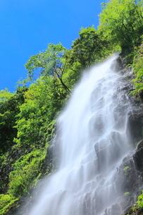 新緑と天滝の写真素材 [FYI02085865]