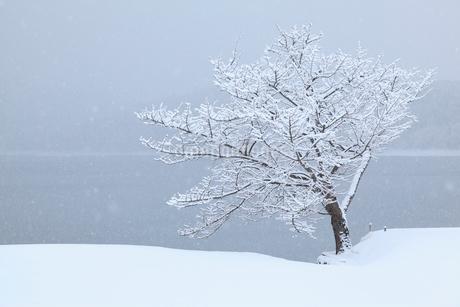 樹氷と青木湖の写真素材 [FYI02085881]