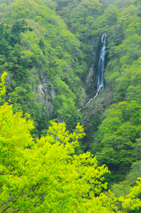 松川渓谷・八滝の新緑の写真素材 [FYI02085885]