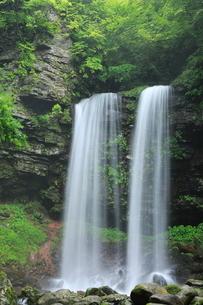 新緑の夫婦滝の写真素材 [FYI02085902]