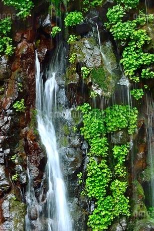 吾妻山地 新緑の幕滝の写真素材 [FYI02085925]