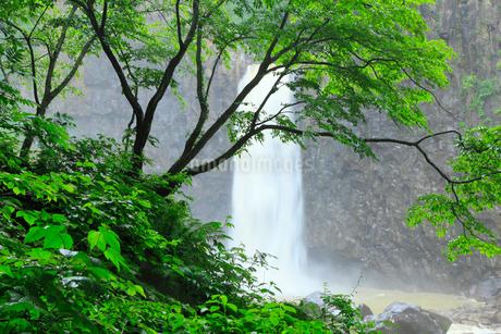 新緑の苗名滝の写真素材 [FYI02085939]