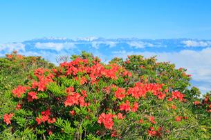 美ヶ原高原 レンゲツツジと北アルプスに雲海の写真素材 [FYI02085943]