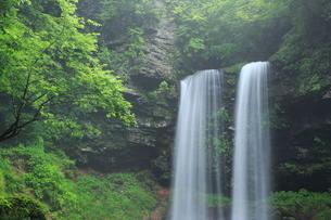 新緑の夫婦滝の写真素材 [FYI02085983]