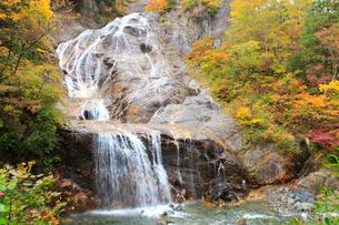 白山スーパー林道 紅葉の姥ヶ滝の写真素材 [FYI02086075]