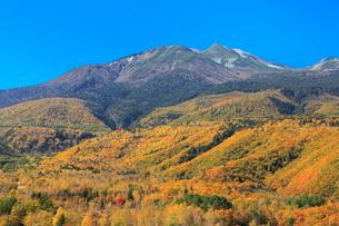 乗鞍高原から望む紅葉の乗鞍岳の写真素材 [FYI02086077]
