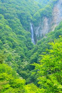 志賀高原・澗満滝と新緑の写真素材 [FYI02086154]