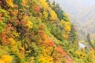 紅葉の白山スーパー林道の写真素材 [FYI02086285]
