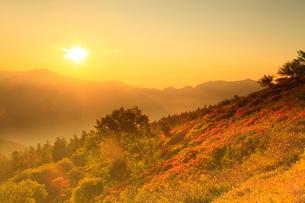 鉢伏山 レンゲツツジと朝日の写真素材 [FYI02086331]