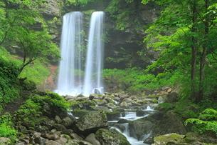 新緑の夫婦滝の写真素材 [FYI02086361]