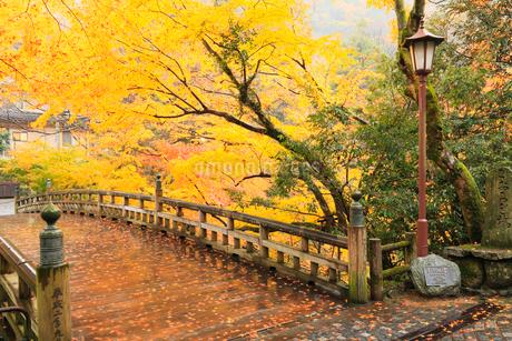 山中温泉・こおろぎ橋と紅葉の写真素材 [FYI02086388]