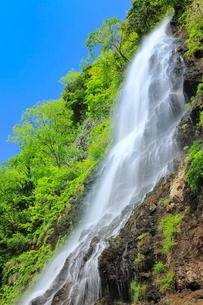 新緑と天滝の写真素材 [FYI02086412]