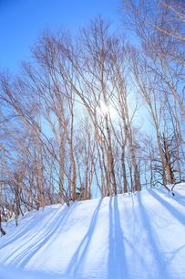 雪原の林と太陽の写真素材 [FYI02086460]