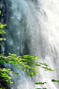 裏磐梯 新緑の小野川不動滝の写真素材 [FYI02086471]