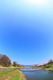 賀茂川とサクラと太陽光の写真素材 [FYI02086482]