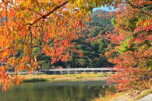 嵐山・渡月橋と紅葉の写真素材 [FYI02086610]