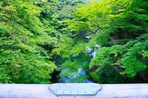 山中温泉・こおろぎ橋から望む新緑の鶴仙渓の写真素材 [FYI02086635]