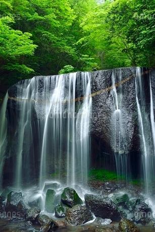 安達太良山西麓 新緑の達沢不動滝の写真素材 [FYI02086688]