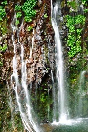 吾妻山地 新緑の幕滝の写真素材 [FYI02086703]