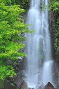 駒ヶ滝と新緑の写真素材 [FYI02086737]