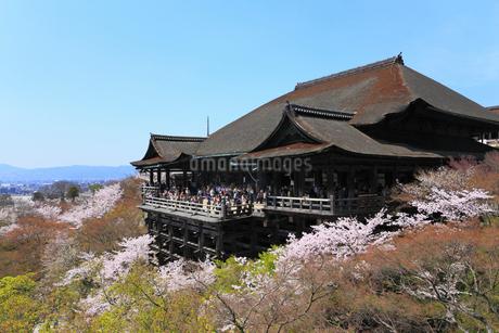 清水寺とサクラの写真素材 [FYI02086791]