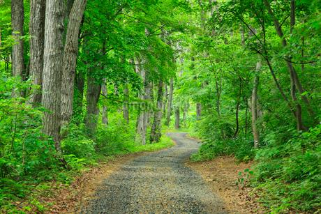 新緑の雑木林と道の写真素材 [FYI02086794]