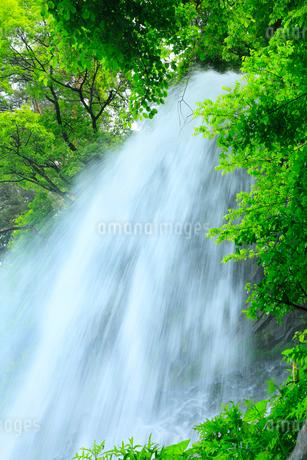 乙女滝と新緑の写真素材 [FYI02086831]