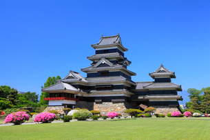 松本城とツツジの写真素材 [FYI02086834]
