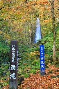 紅葉の雨滝の写真素材 [FYI02086838]