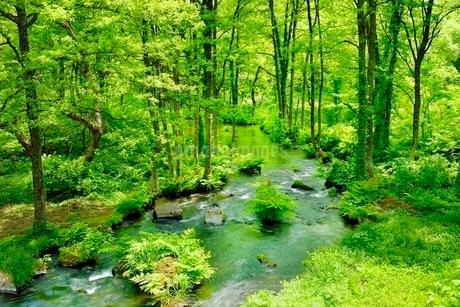 裏磐梯 長瀬川と新緑の写真素材 [FYI02086903]