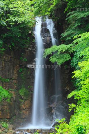 新緑の小野の滝の写真素材 [FYI02086939]