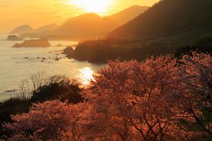 丹後松島のサクラと朝日 日本海の写真素材 [FYI02087047]