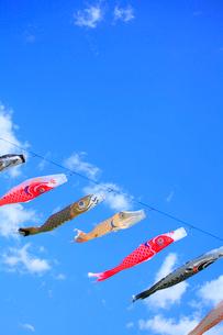 鯉のぼりと青空の写真素材 [FYI02087065]