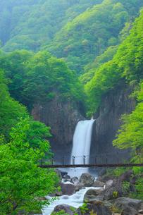 新緑の苗名滝の写真素材 [FYI02087068]