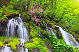 川俣東沢渓谷 吐竜の滝とツツジの写真素材 [FYI02087123]
