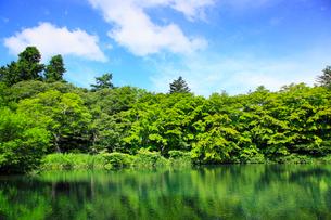 軽井沢 雲場池の緑の写真素材 [FYI02087149]