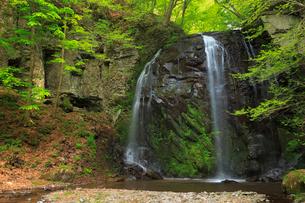 新緑の不動滝の写真素材 [FYI02087181]