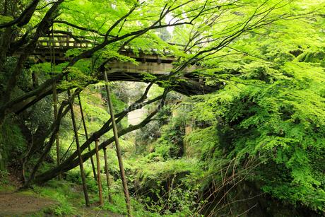 山中温泉 新緑のこおろぎ橋の写真素材 [FYI02087182]