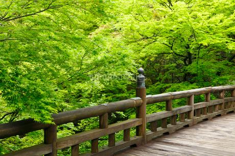 山中温泉 新緑のこおろぎ橋の写真素材 [FYI02087207]