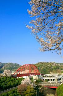 音戸大橋とサクラの写真素材 [FYI02087263]