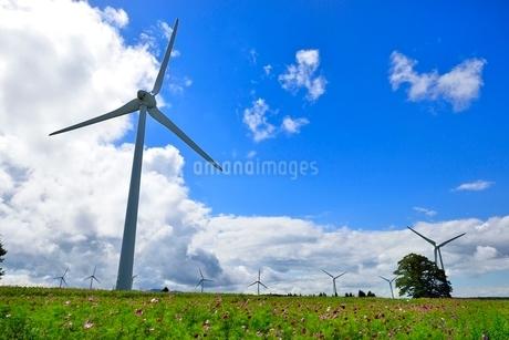 コスモスの花畑に風車の写真素材 [FYI02087341]
