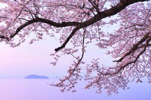 海津大崎のサクラ 朝焼けの琵琶湖と竹生島の写真素材 [FYI02087344]