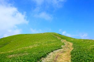 美ヶ原高原 緑の草原と一本の道の写真素材 [FYI02087395]