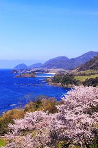 丹後松島のサクラと日本海の写真素材 [FYI02087453]