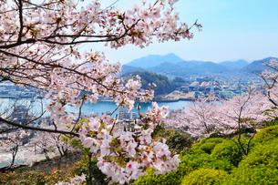 千光寺公園のサクラ 尾道水道と向島の写真素材 [FYI02087462]